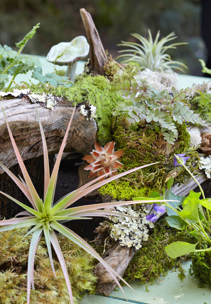 Caring for your woodland garden