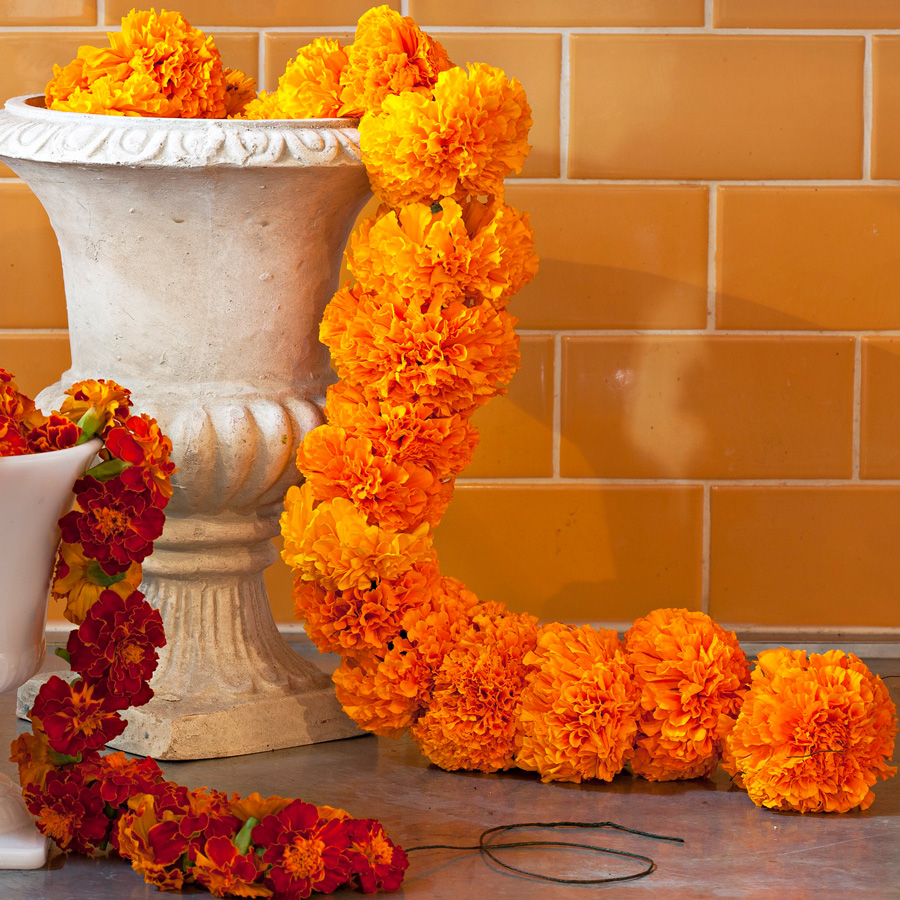 Make a marigold garden