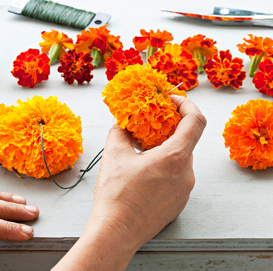 Step 1: Begin threading marigolds