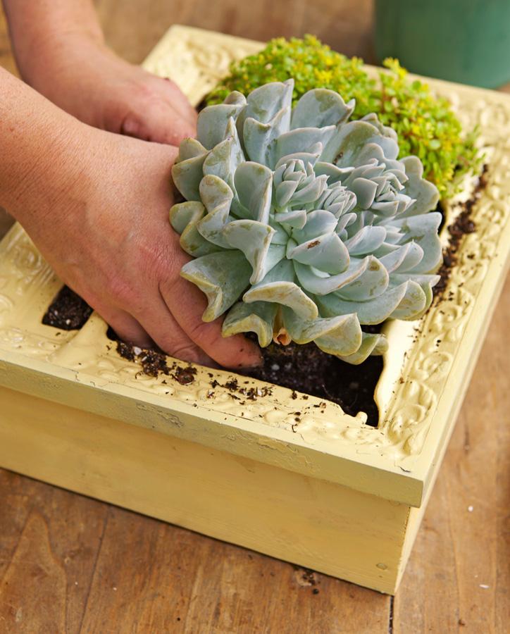 Step 6: Plant