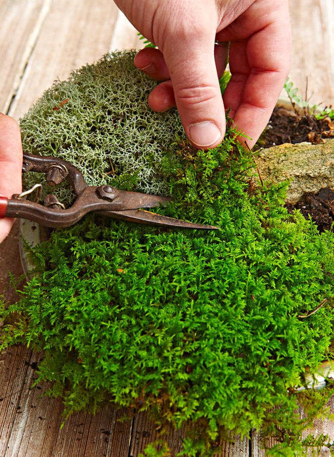 Step 5: Cut moss to size