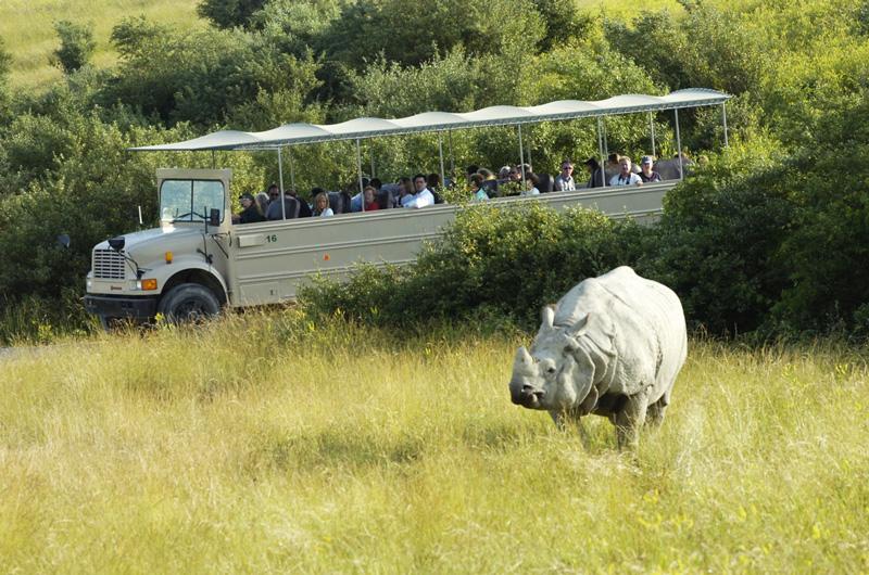 The Wilds Safari