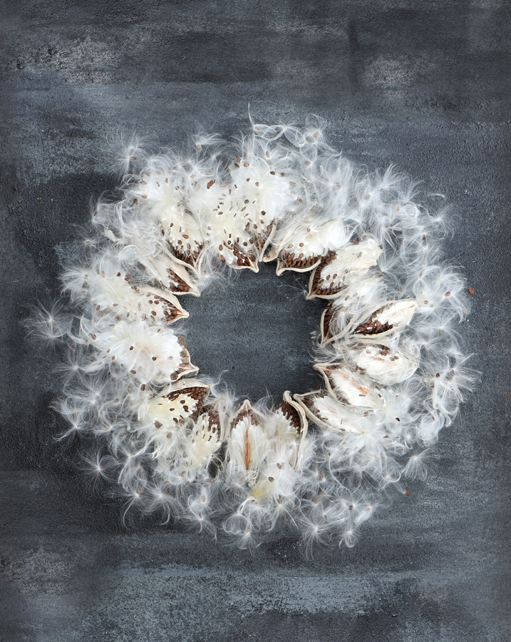 Milkweed wreath