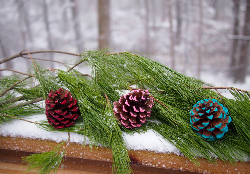 Pinecones-in-snow