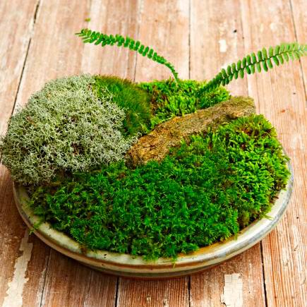 DIY moss dish garden