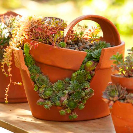 How to plant a cracked-pot succulent garden