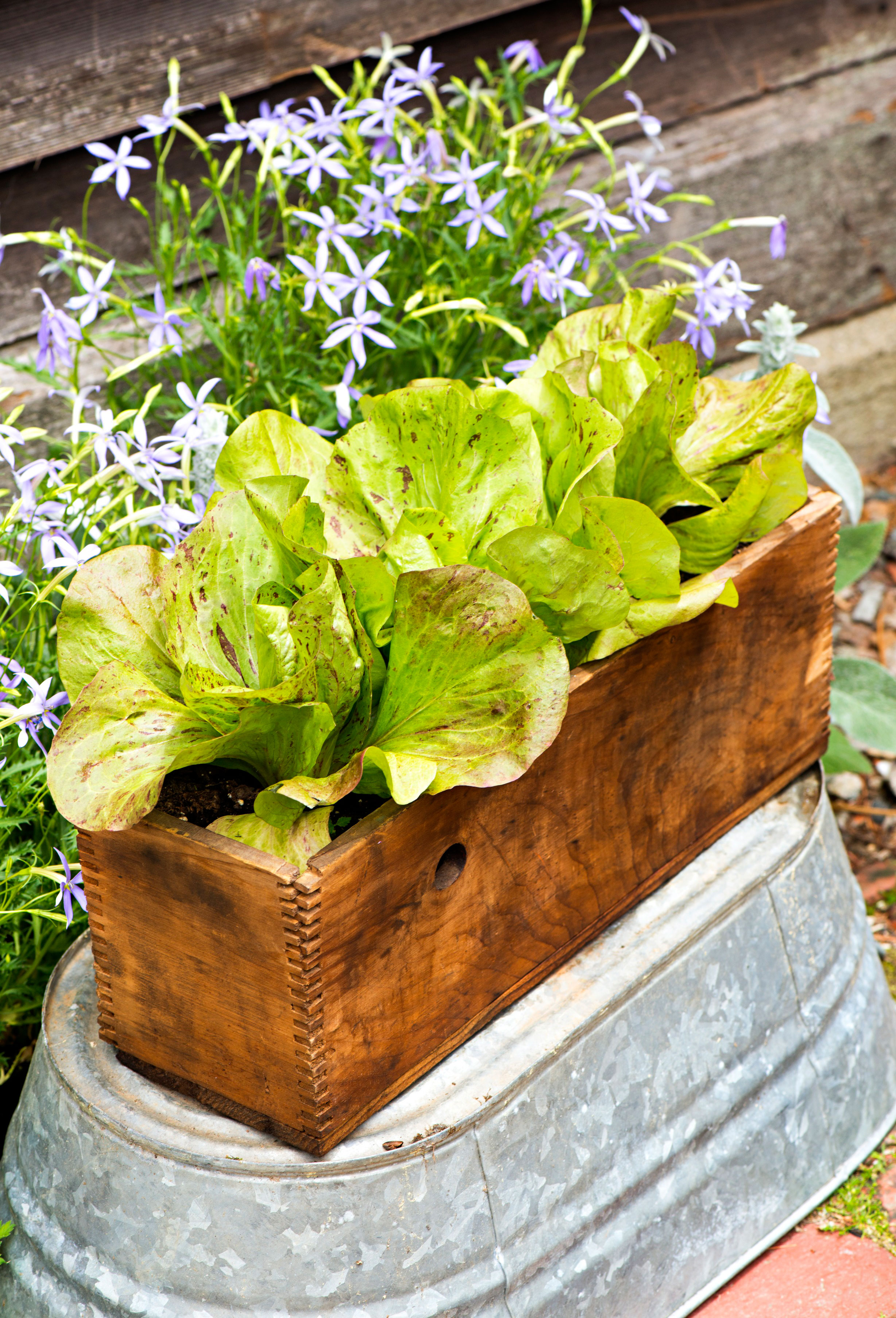 Vegetable vessel