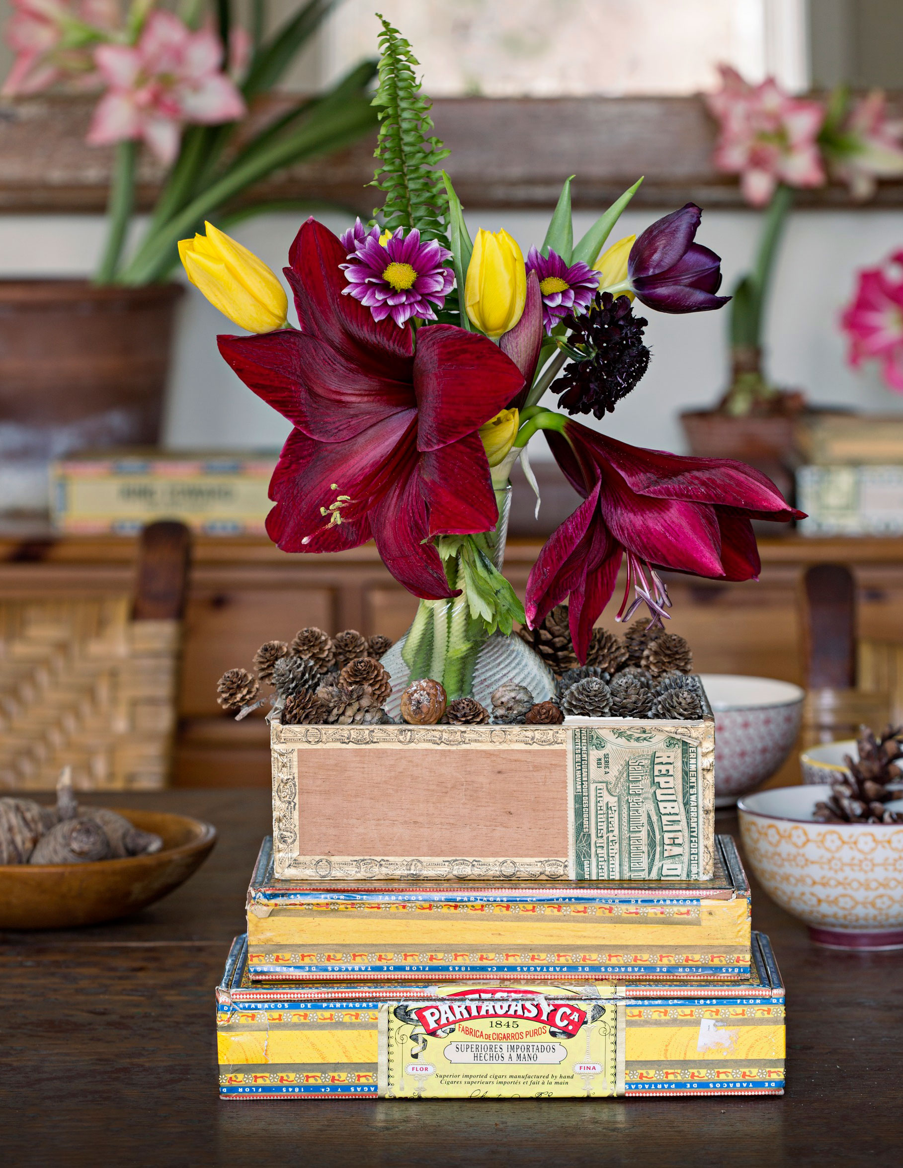 Amaryllis on cigar boxes