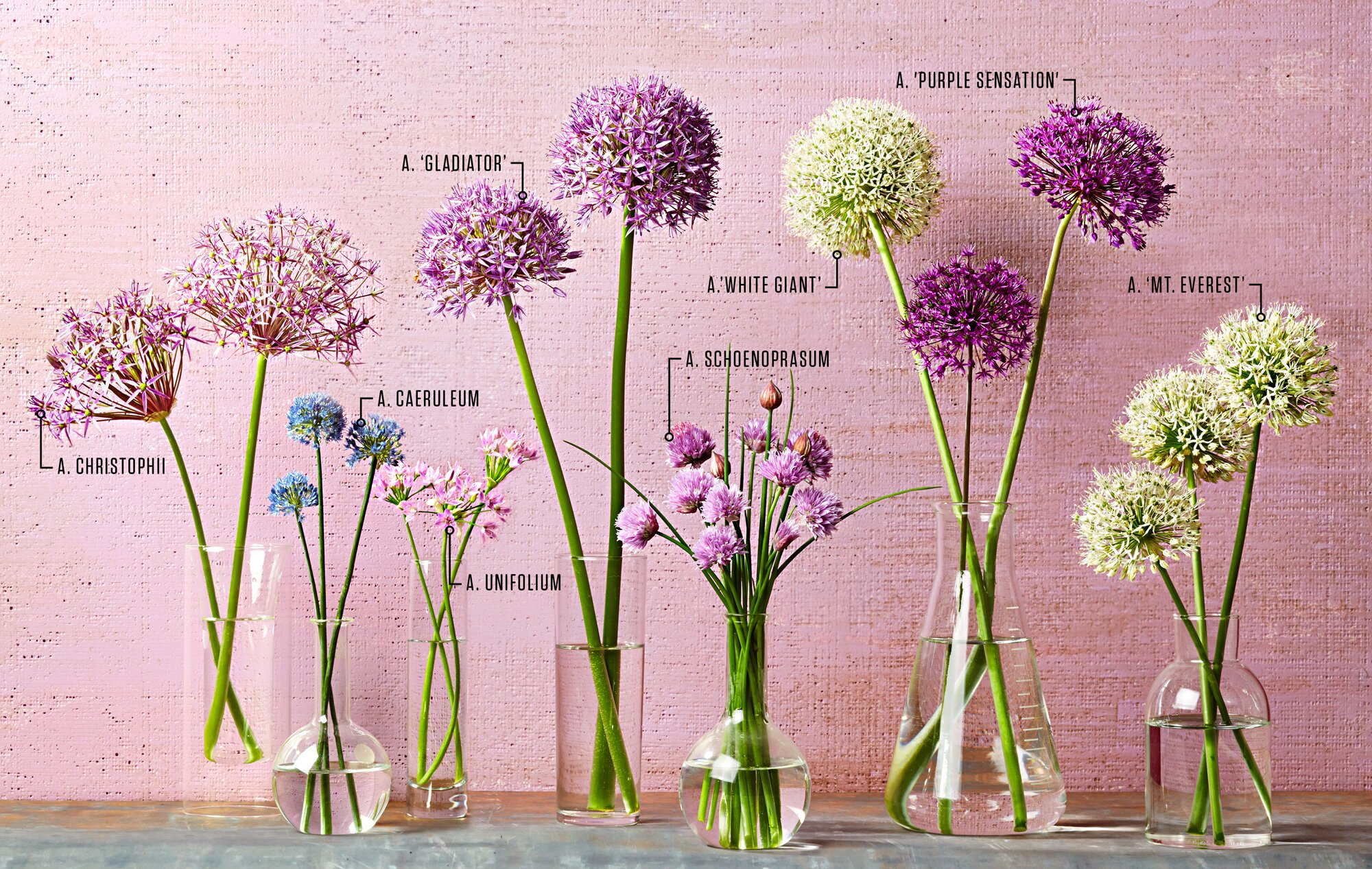 Your Guide To Alliums Midwest Living
