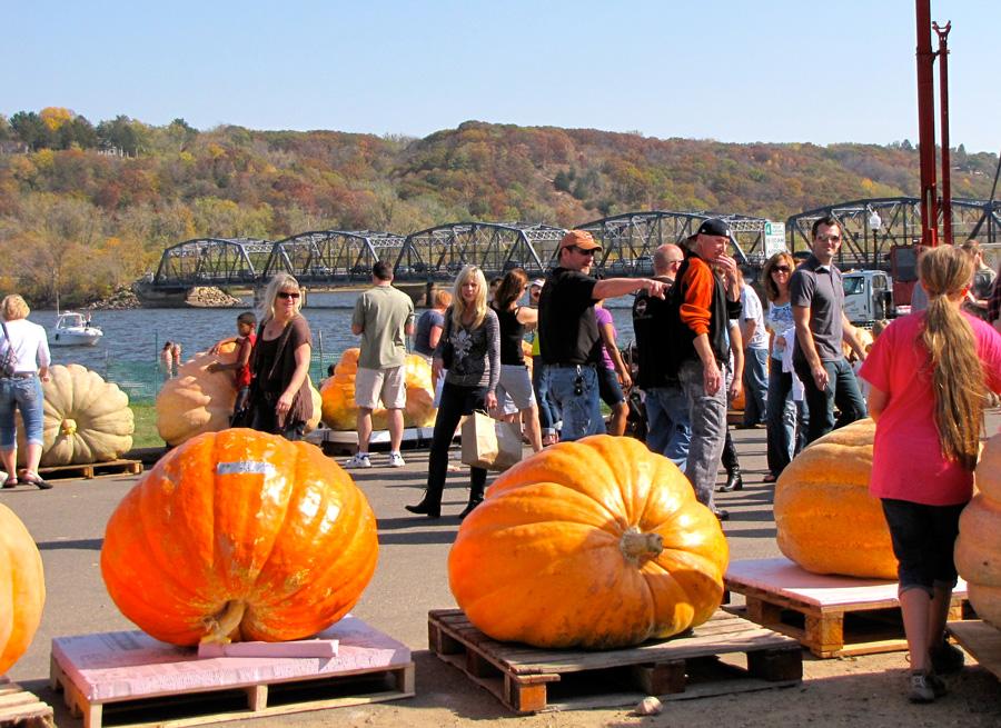 See Supersized Pumpkins