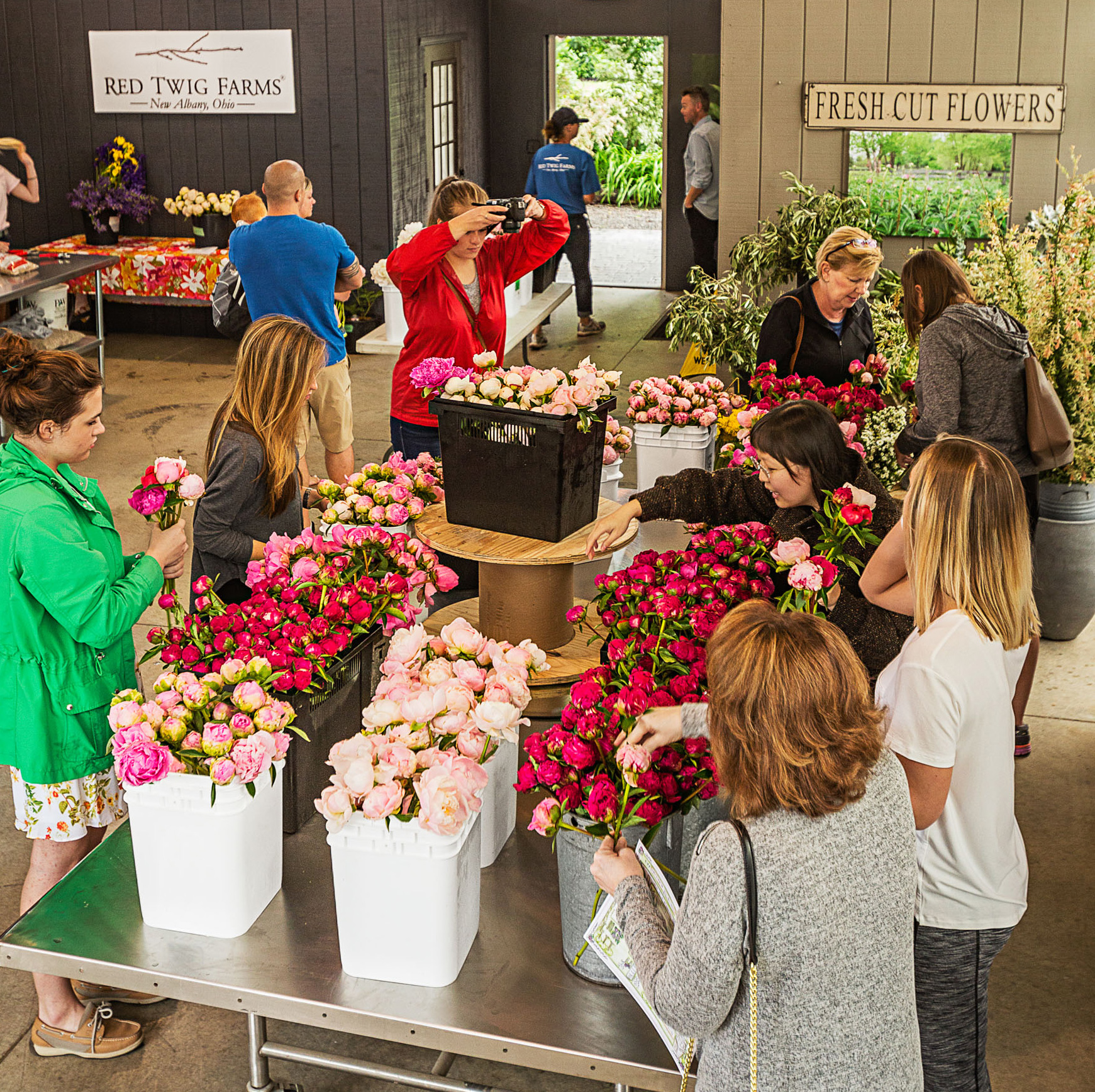 Red Twig Farms peony sale