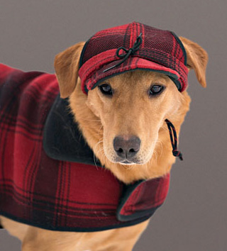 Critter Kromer and SK fleece dog jacket