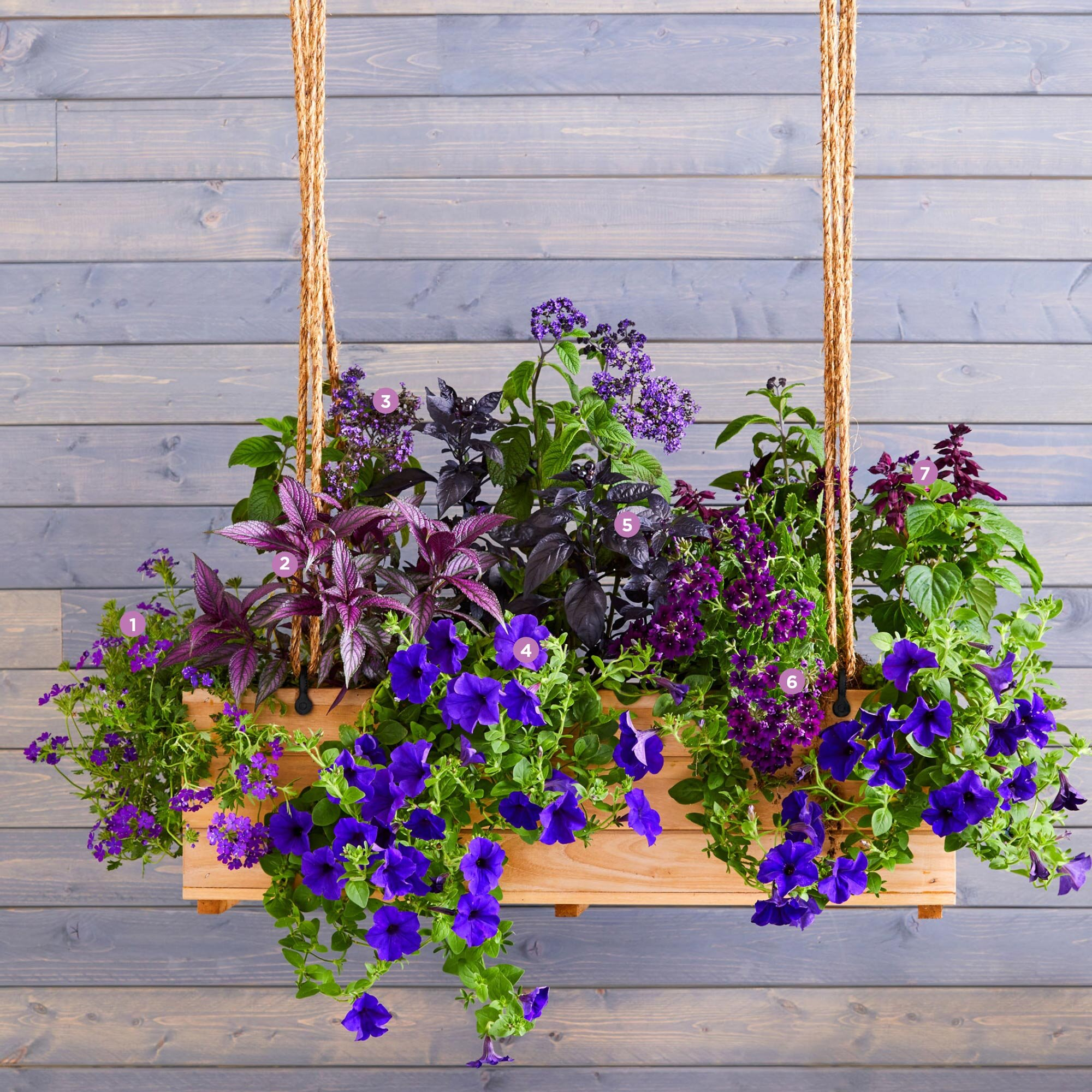 Beautiful Window BOx Planters