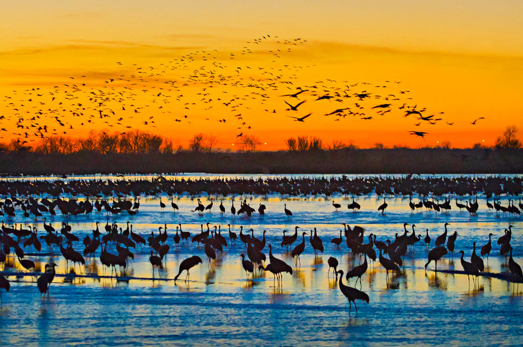 March of the cranes