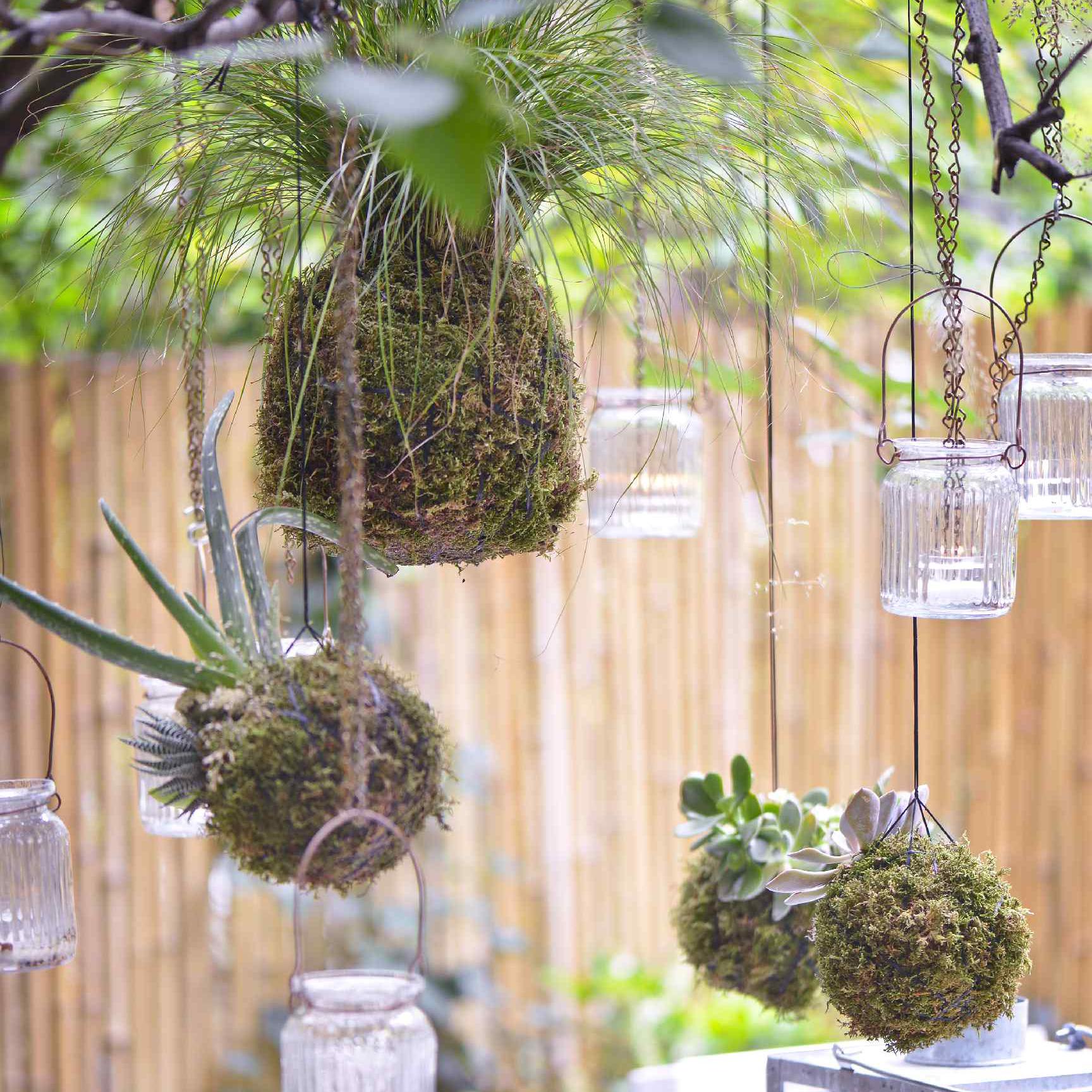Moss ball planters