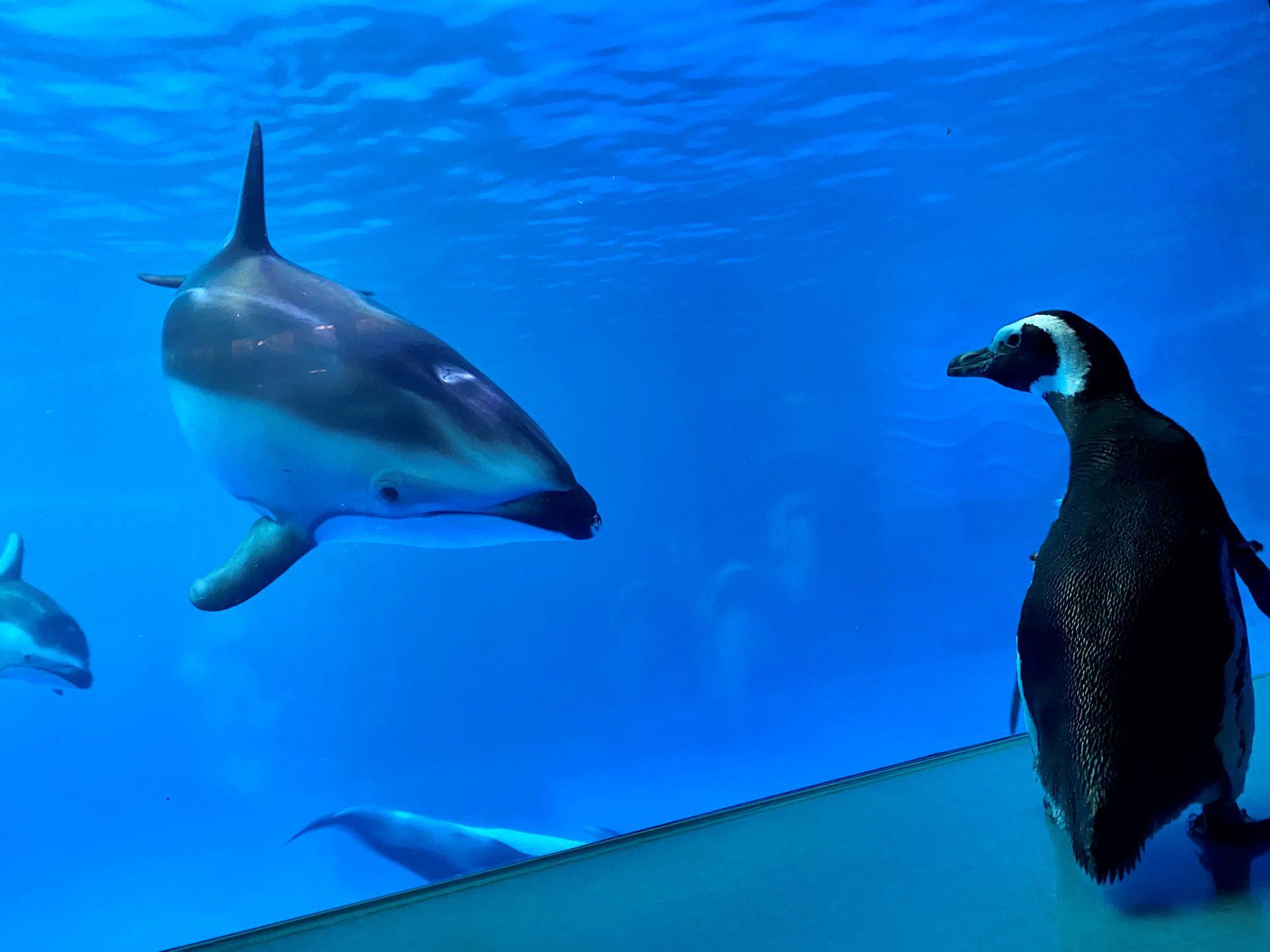 Penguin Tour at Shedd Aquarium