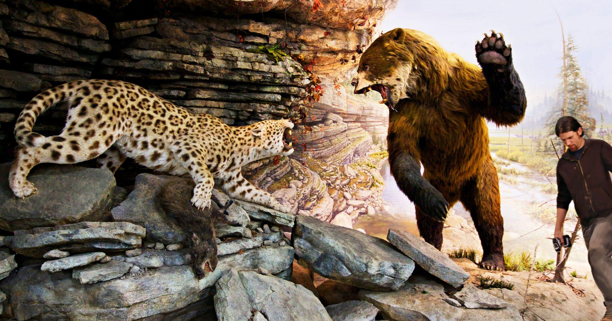 Leopard Diorama