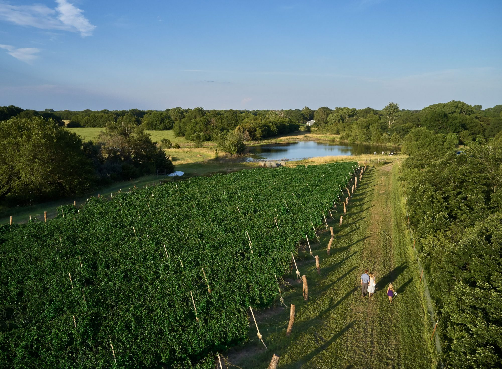 Elderslie Farm fields
