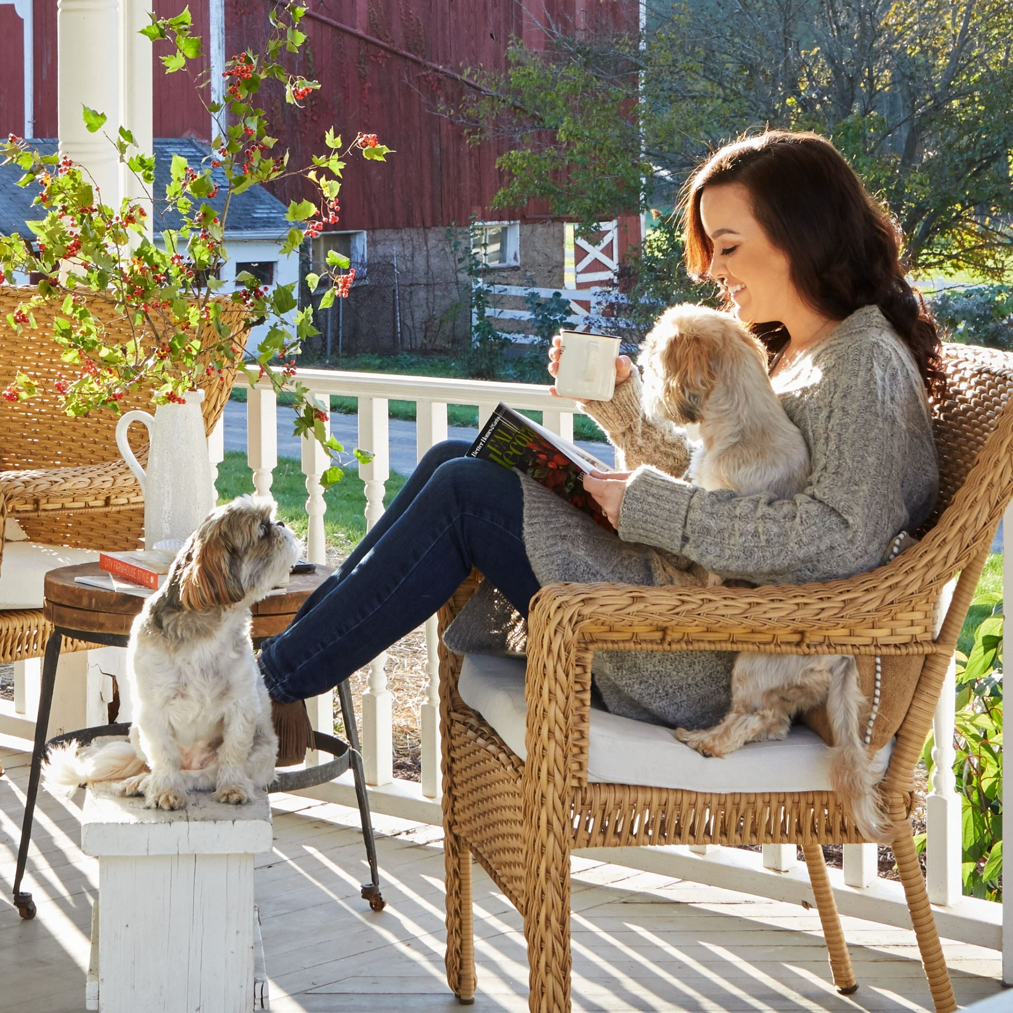 Dogs on porch