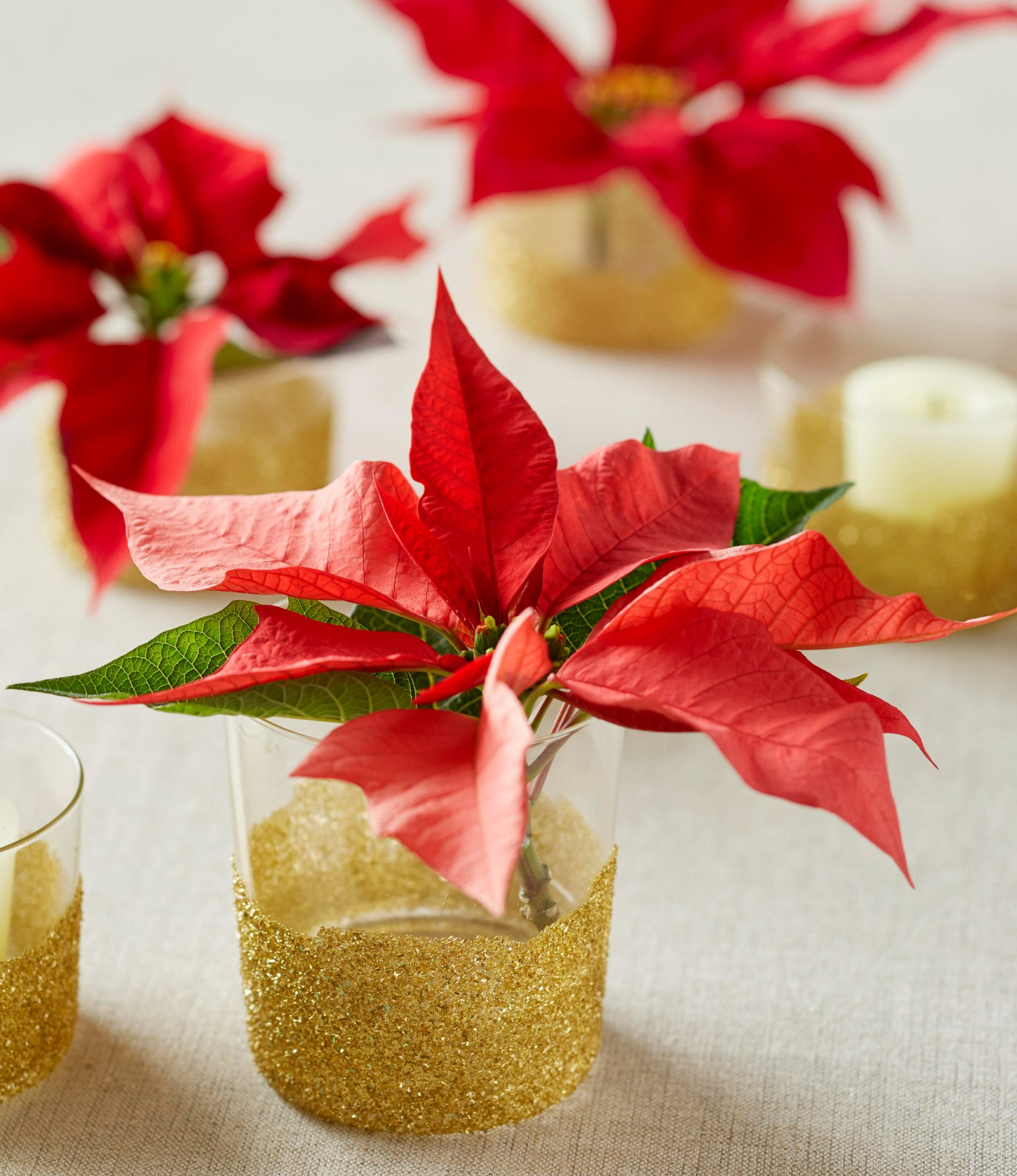 Poinsettias and crafts