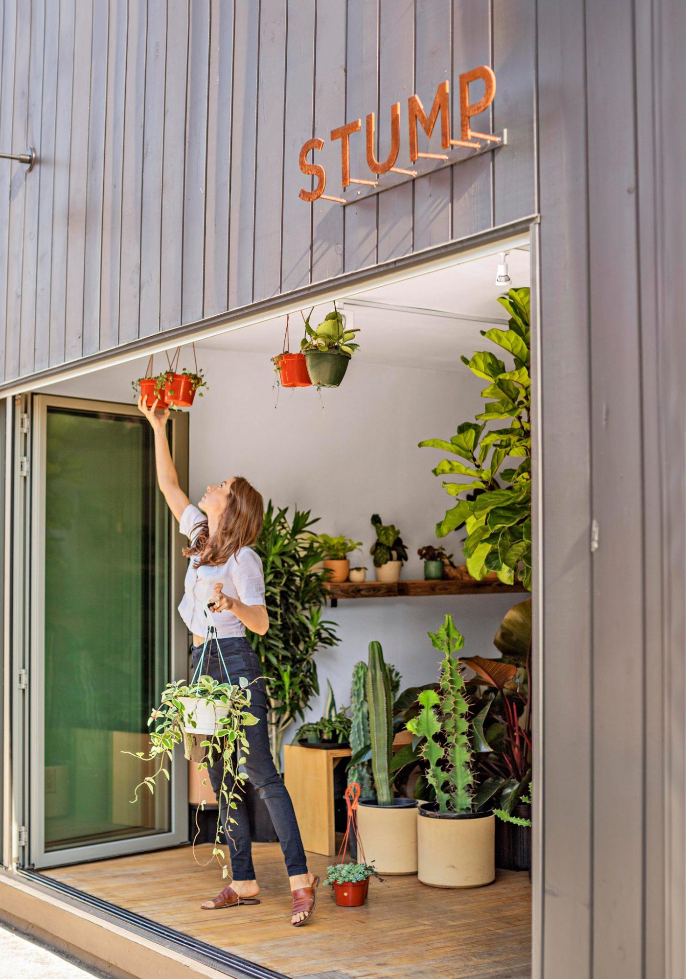 Stump plant shop