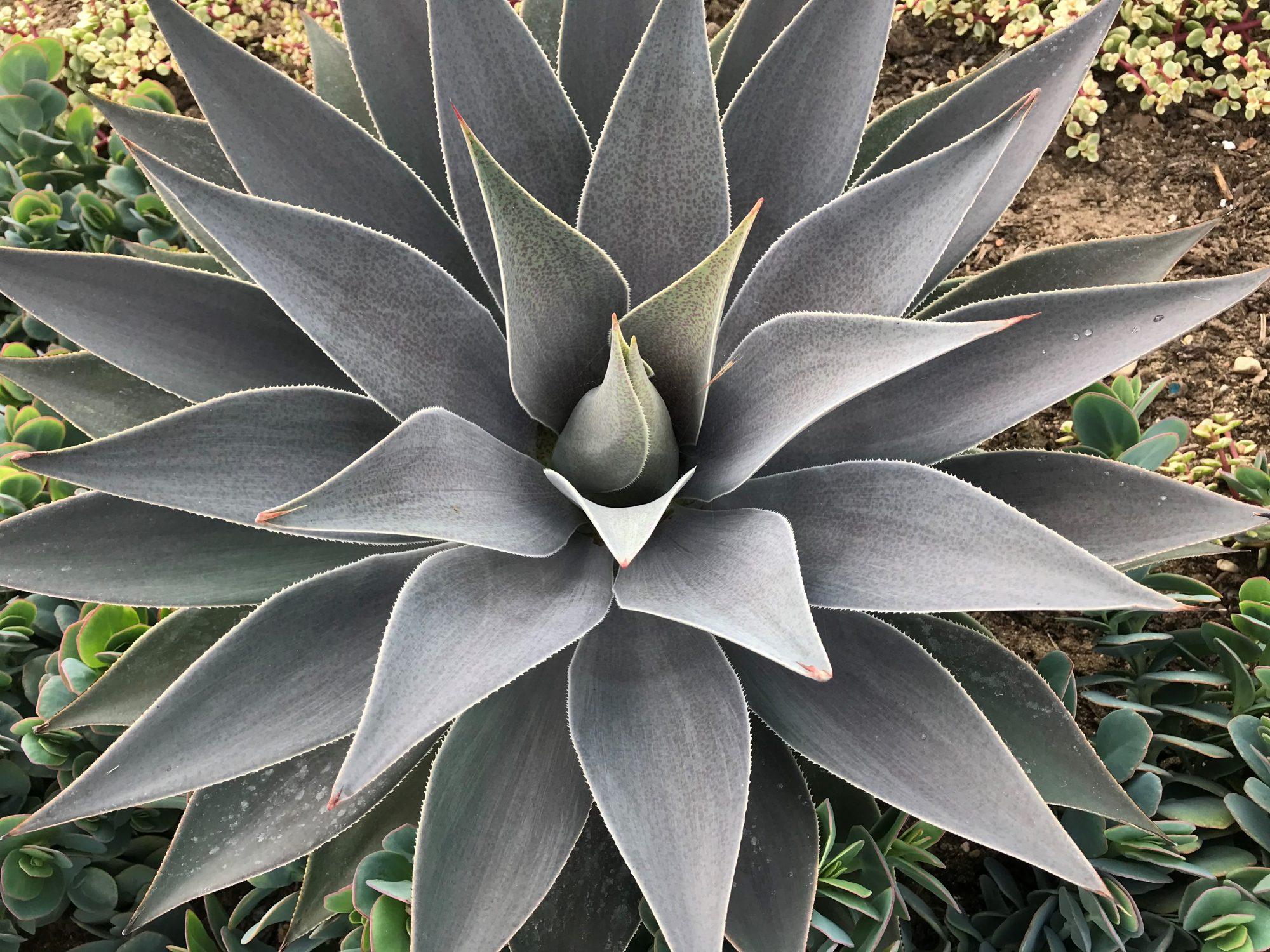 Plant picks from Hans Hansen