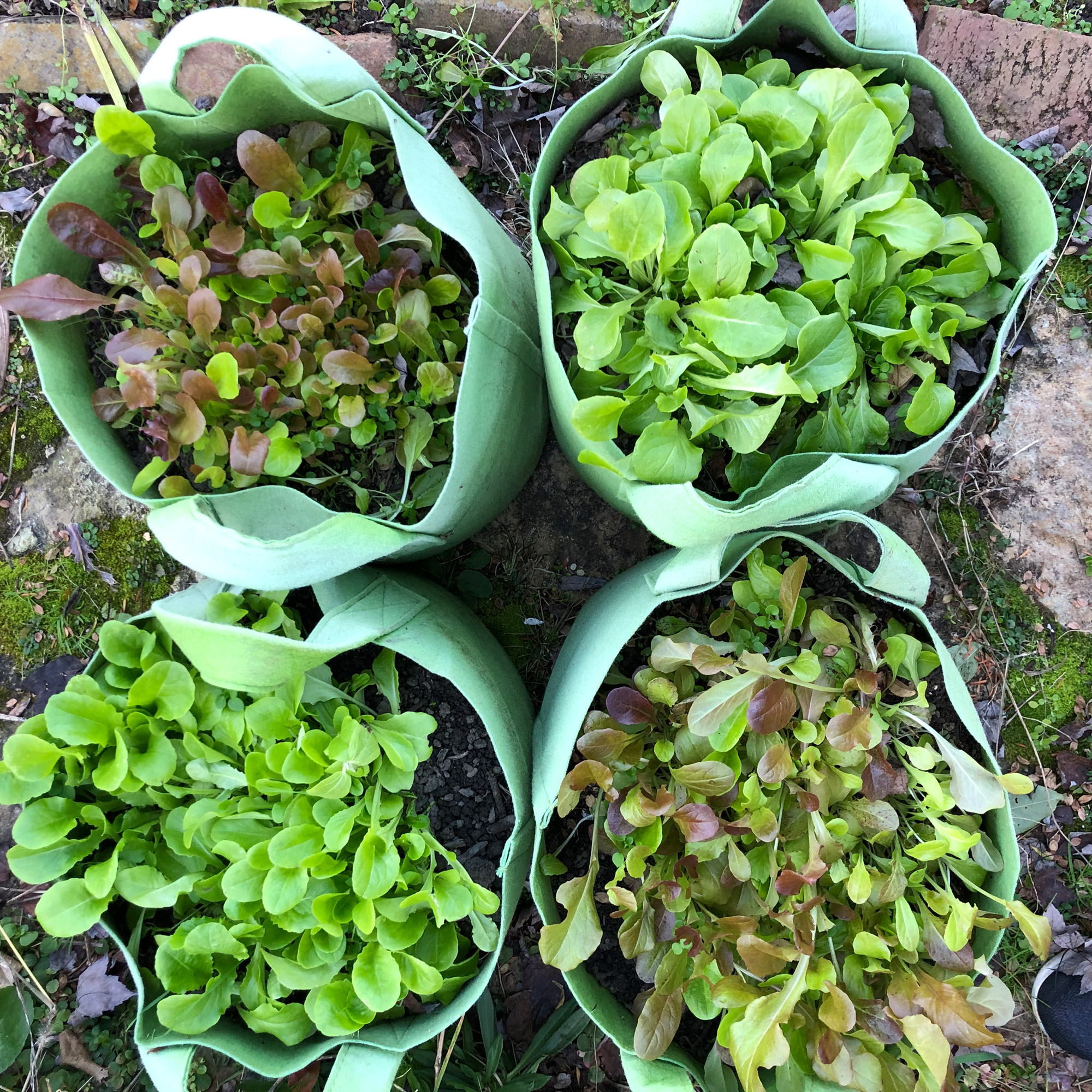 Group of vegetable grow bags