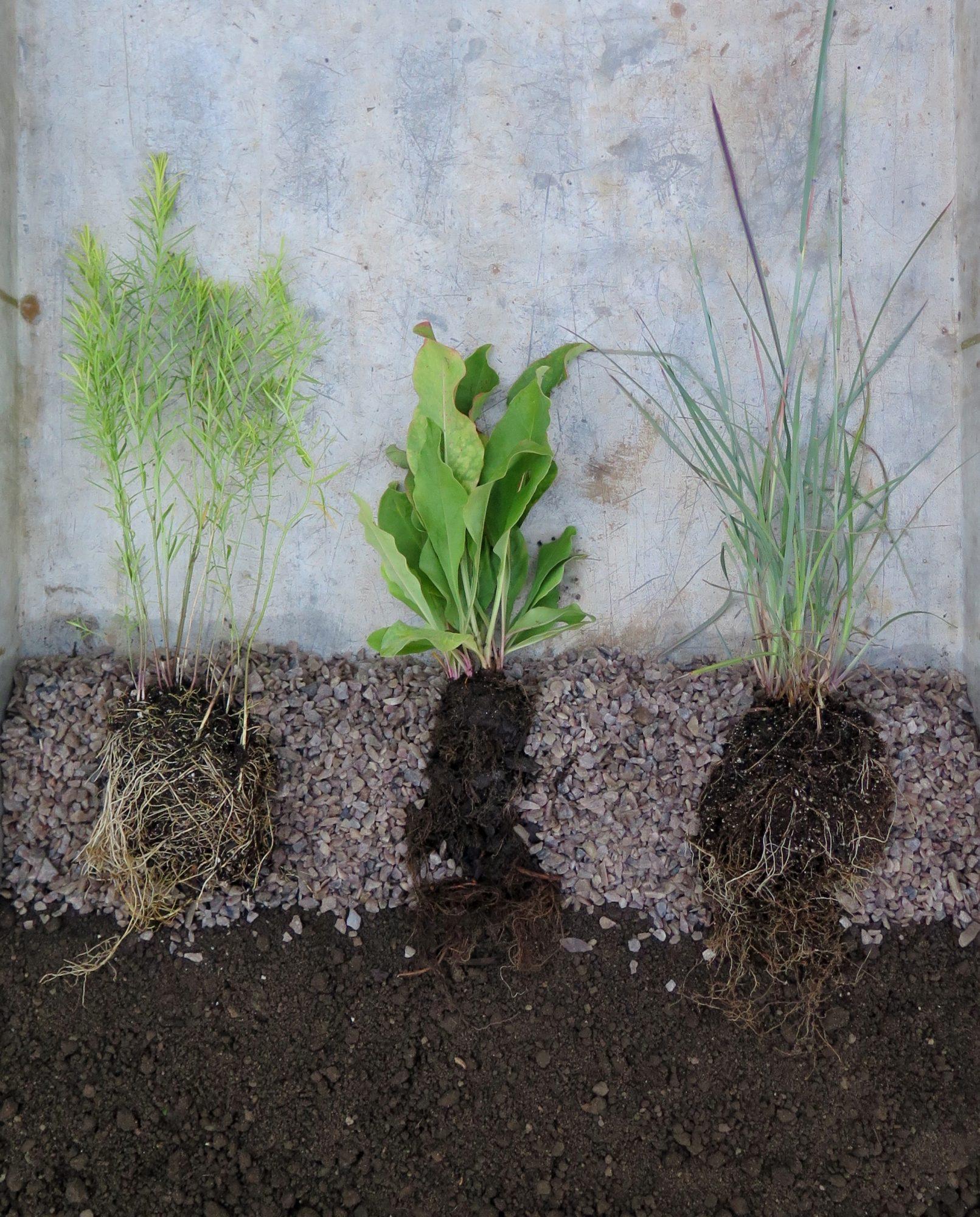 Gravel garden ideas