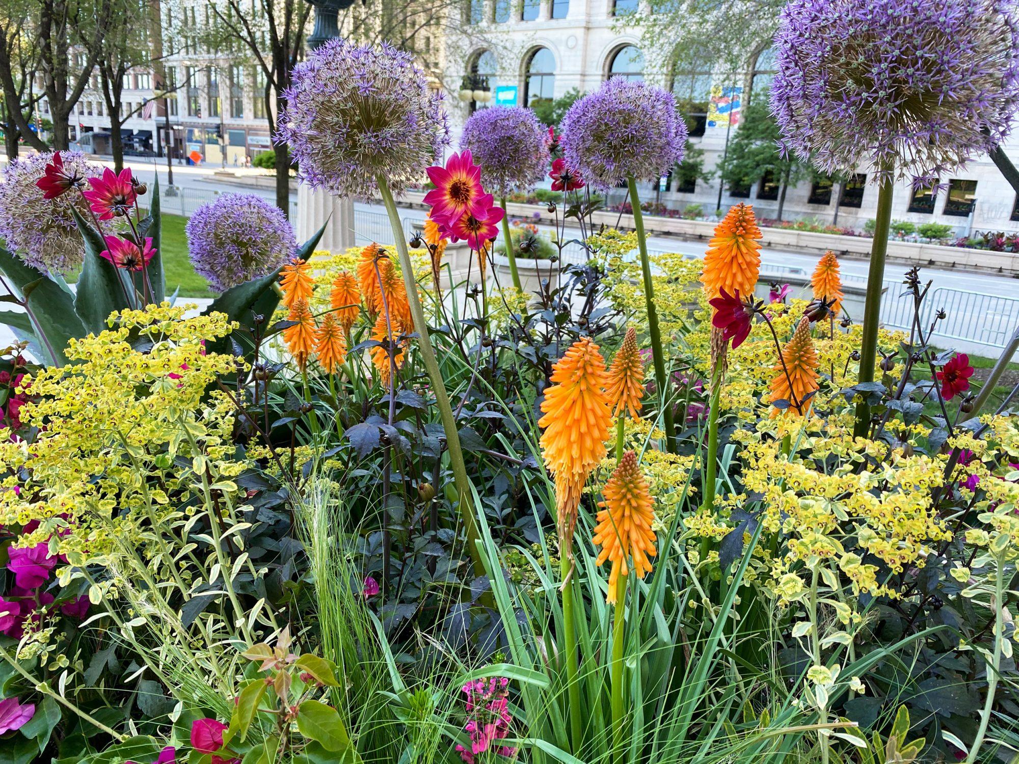 Chicago container gardens