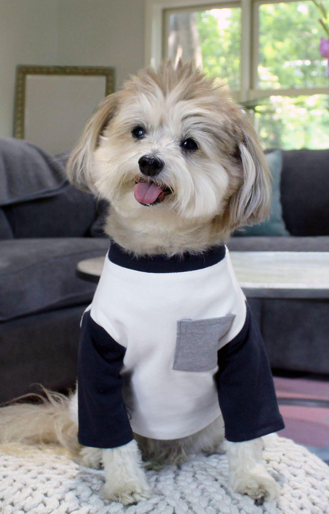 Dog Threads Brand