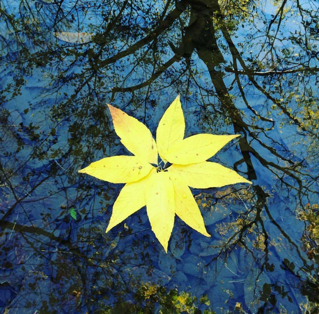 Floating mandala