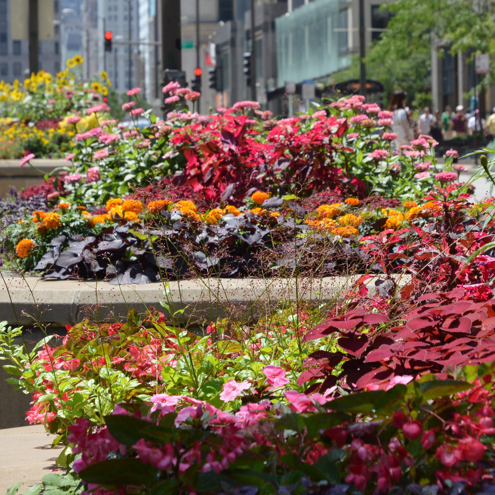 Michigan Avenue planters