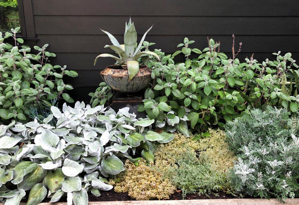 Silver tone garden plants