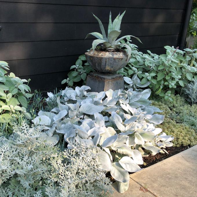 Silver tone plants