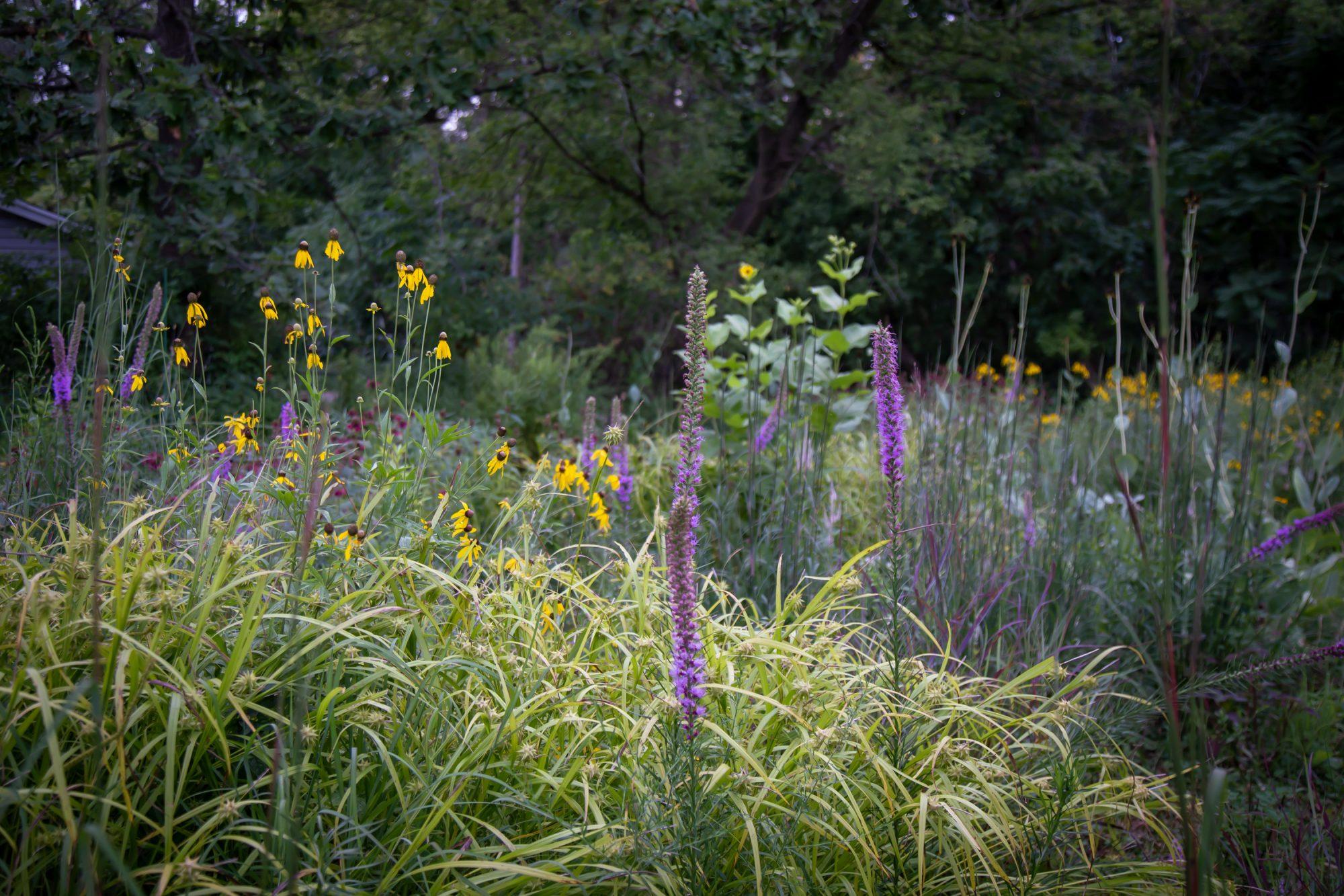 Sedge garden