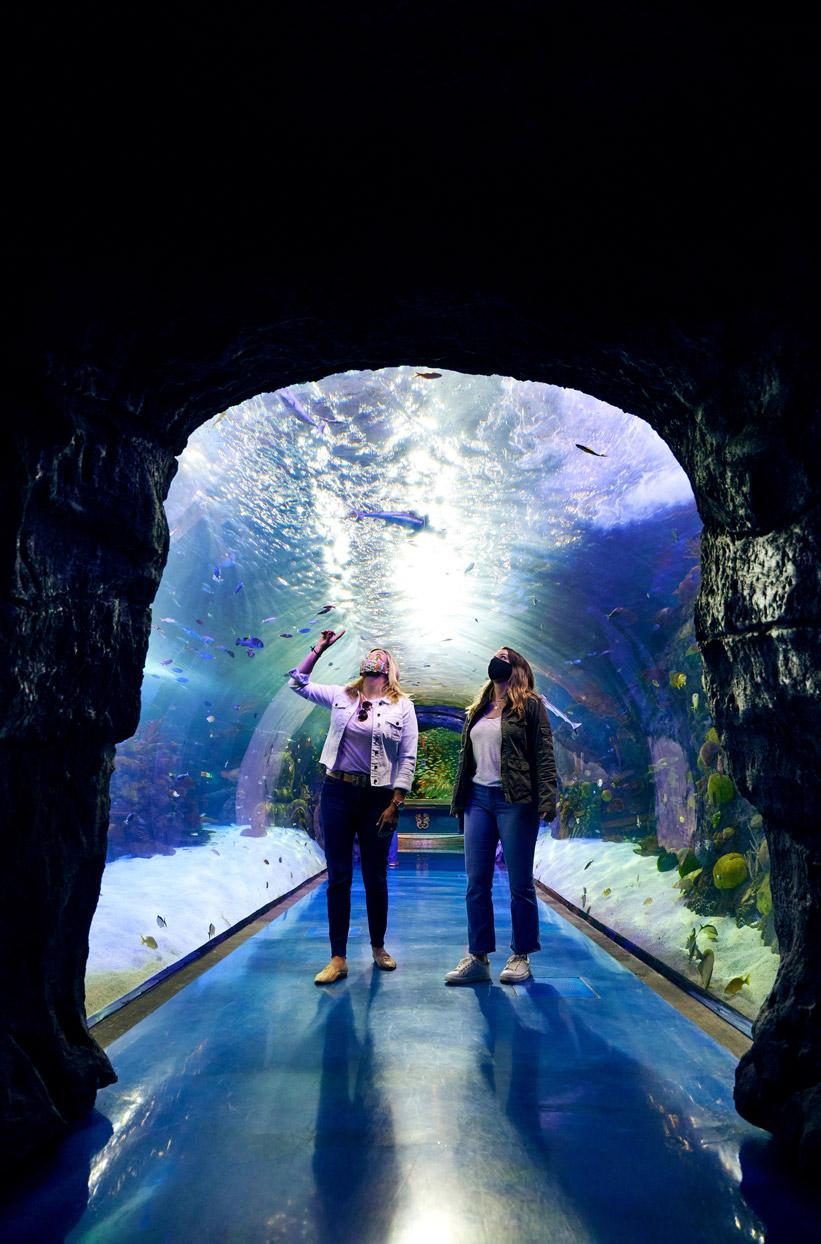 Aquarium Boardwalk