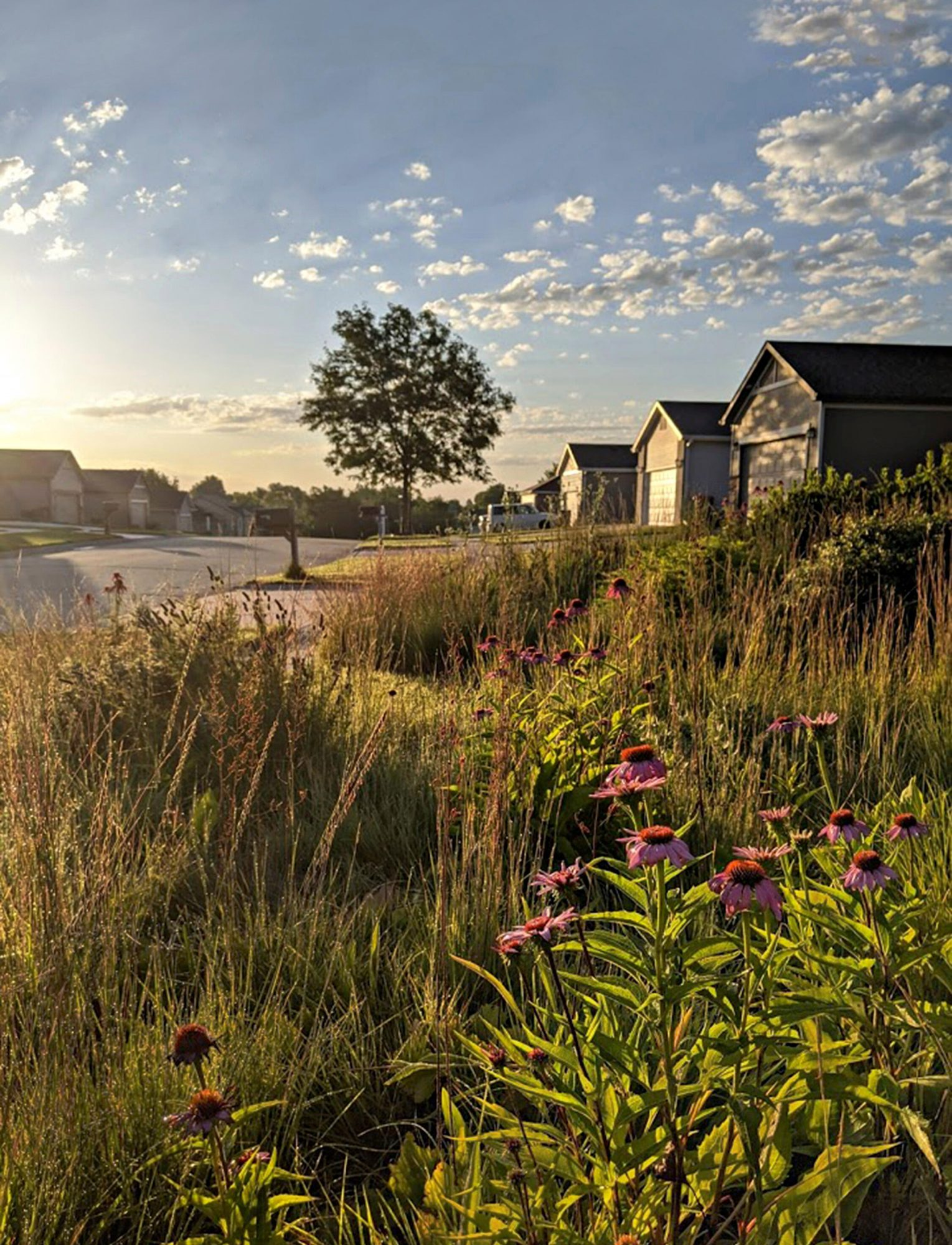 Why You Should Consider A Prairie-Style Yard