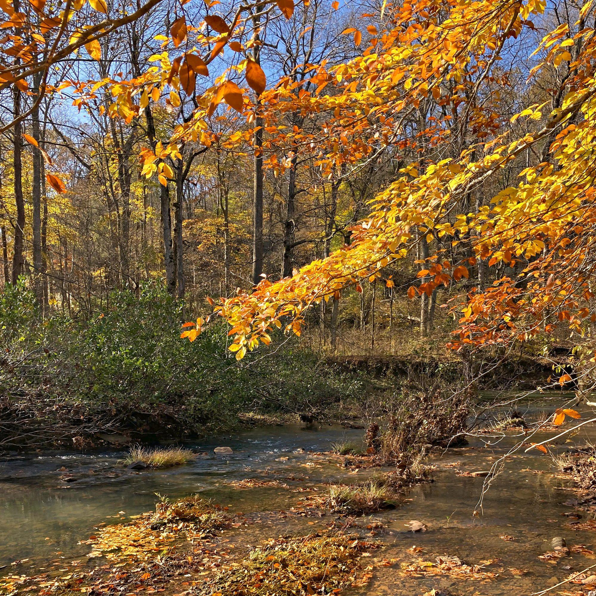 Fall staff road trips southern Illinois