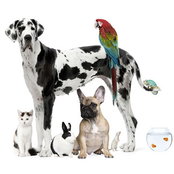 Find the Best Family Pet For You