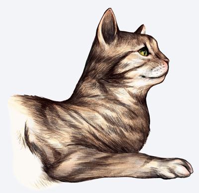 Cat-happy.jpg
