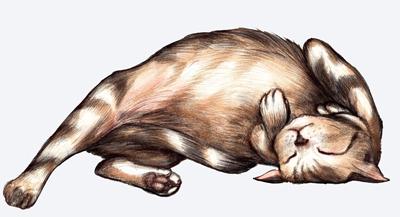 relaxed-cat.jpg