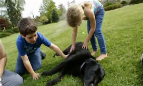 How to Train a Dog with Kids