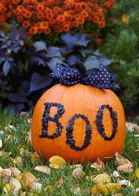 Buttoned Up Pumpkin