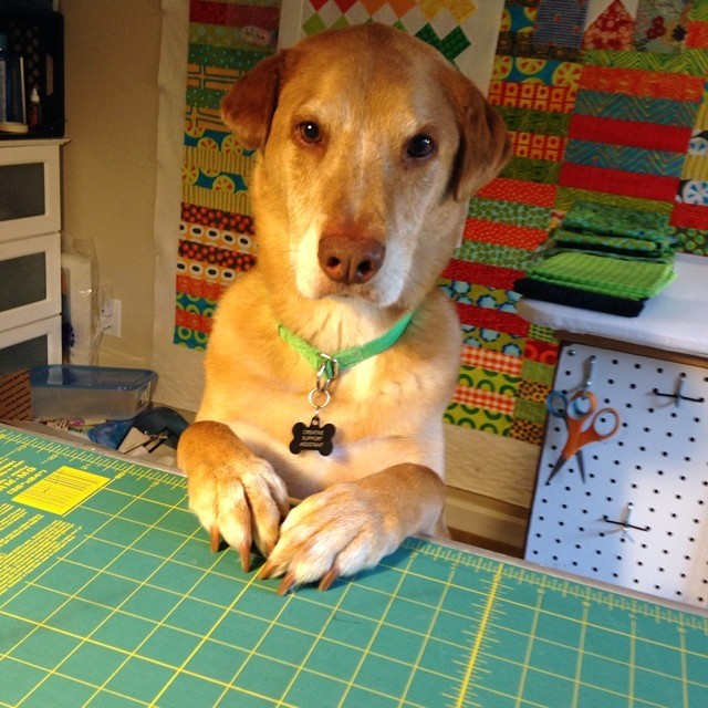"Dogs Who ""Sew"""