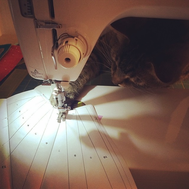 Cats Who  Sew