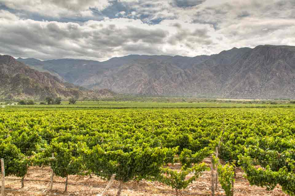Vineyards of Argentina
