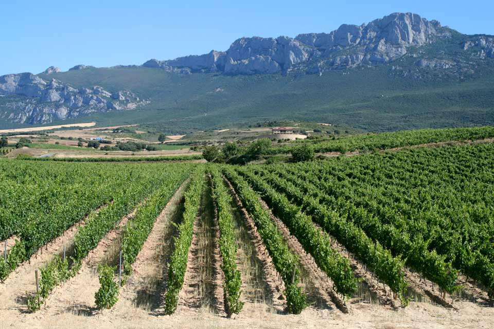 Vineyards of Rioja, Spain