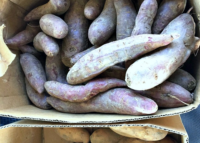 edited-purple-sweet-potatoes-grown-in-north-carolina-photo-by-leslie-kelly
