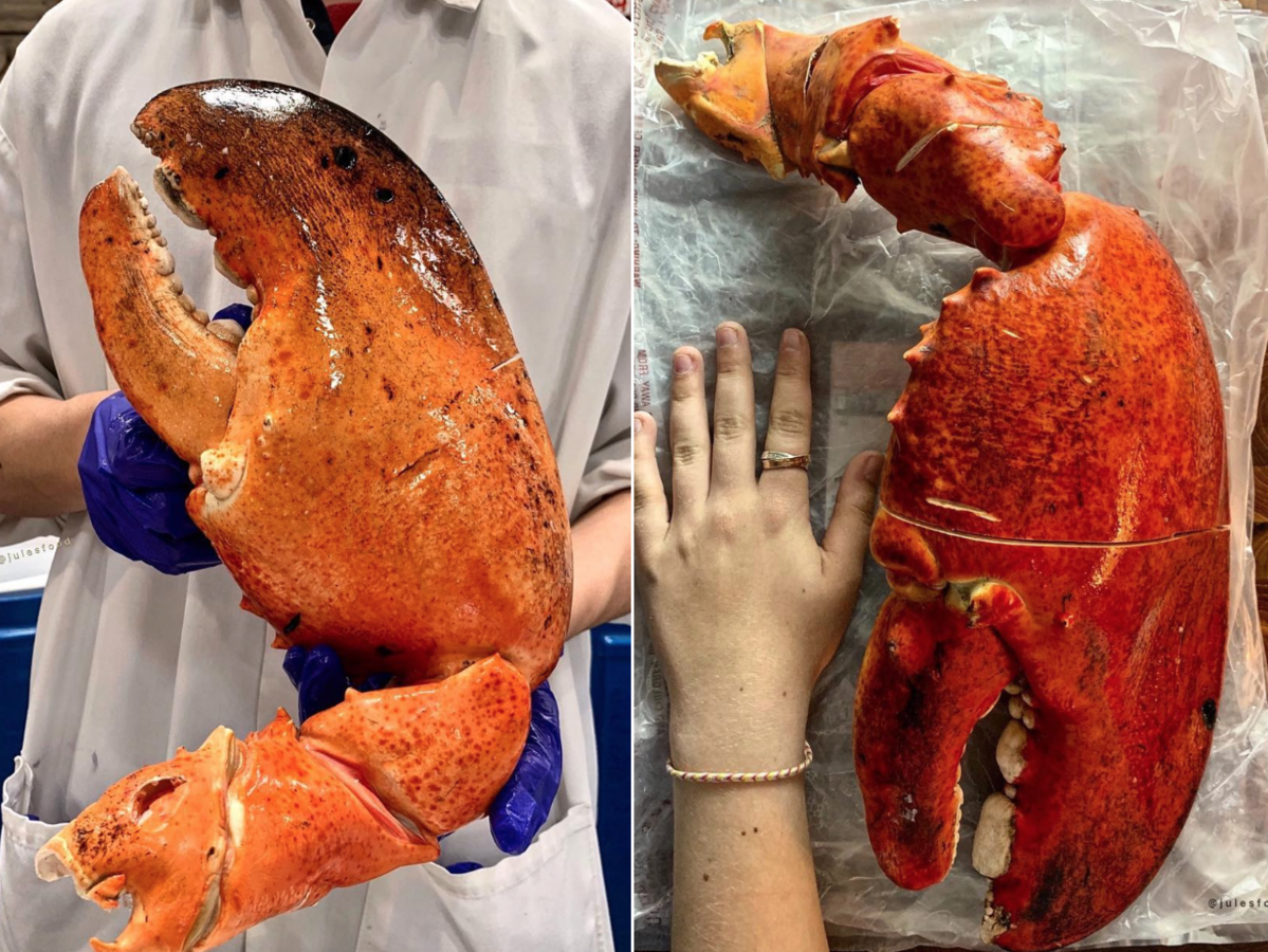 costco large lobster claw
