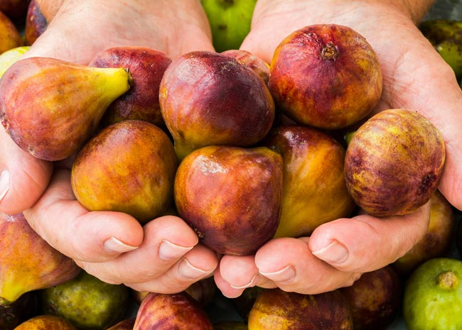 person holding handfuls of figs
